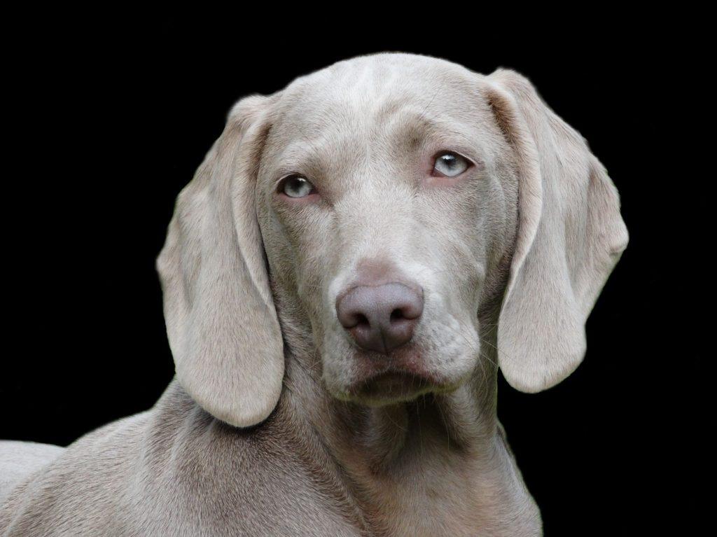 Dich Bauchtasche Hundehalter Und Dein Für Richtige Die 6Yfb7yg